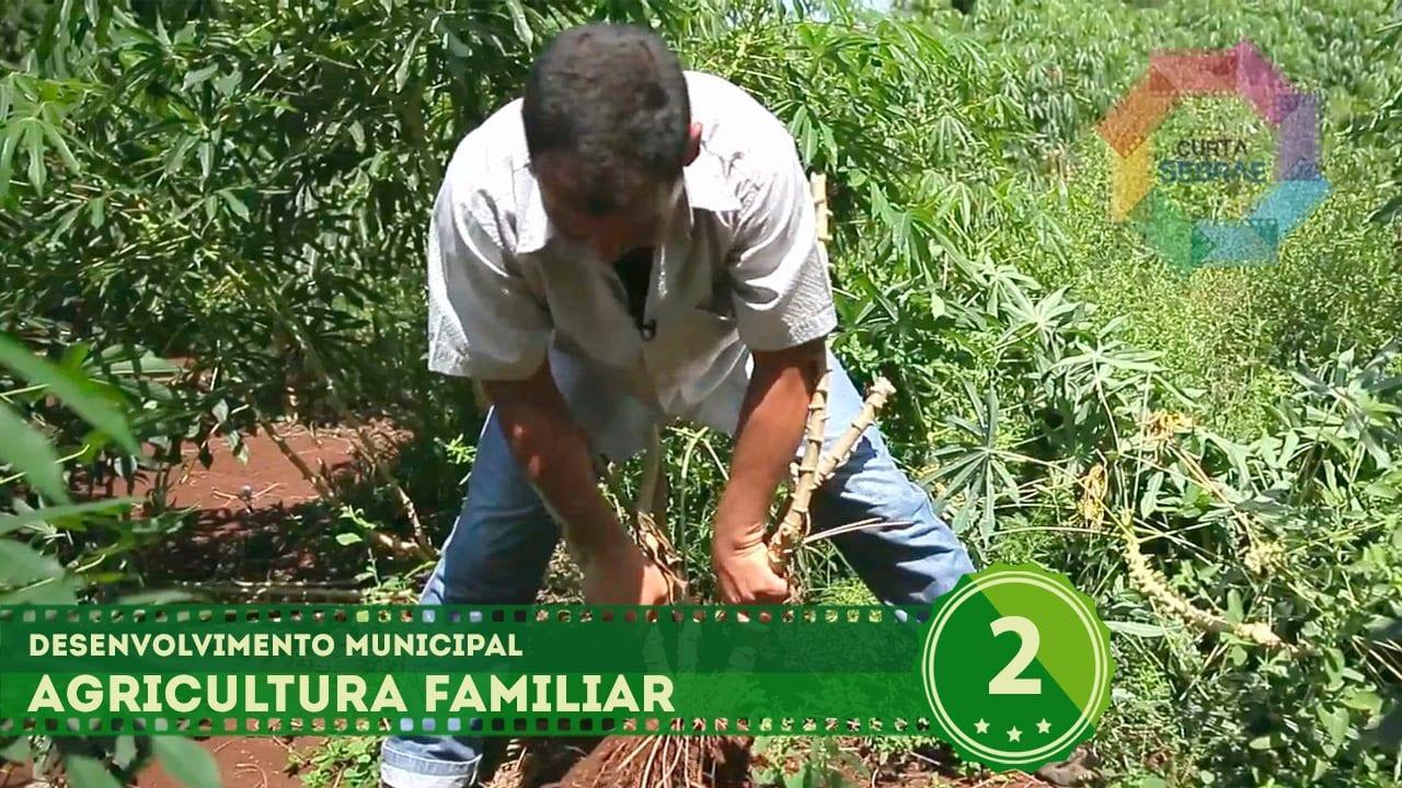 Agricultura Familiar (Maracaju/MS) // Desenvolvimento Municipal