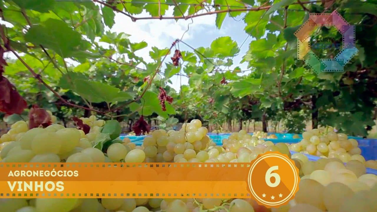 Agronegócio // Vinicultura Orgânica